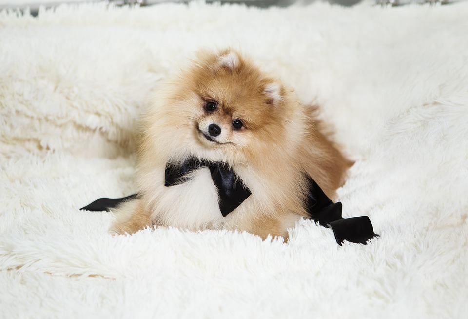 pes v domácnosti