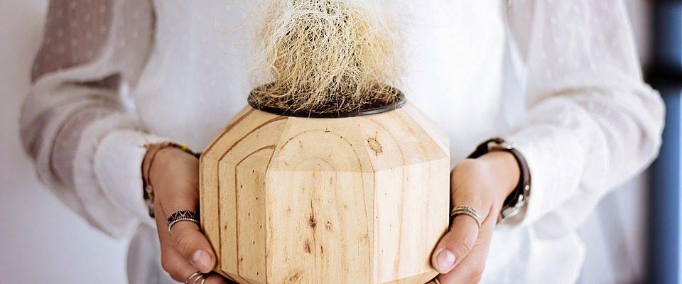 myty spojené s péčí o kaktusy