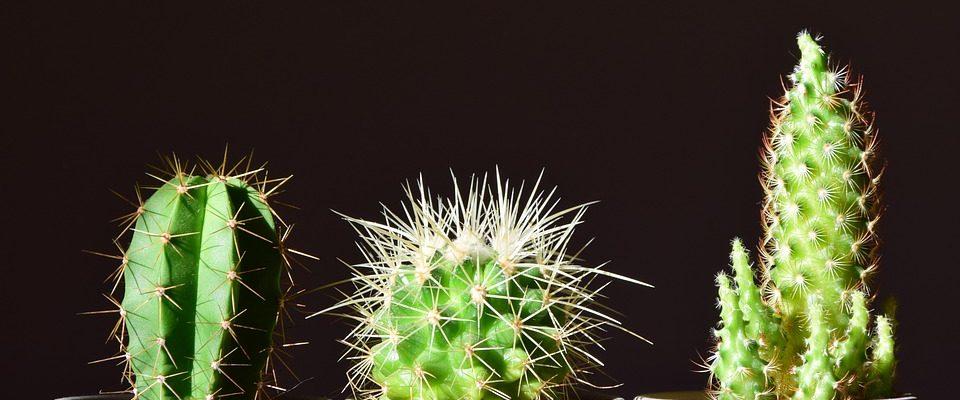 druh pokojových rostlin