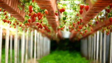 Co jste o jahodách nevěděli