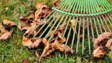 Spadané listí
