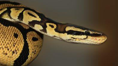 Rady pro chov hadů