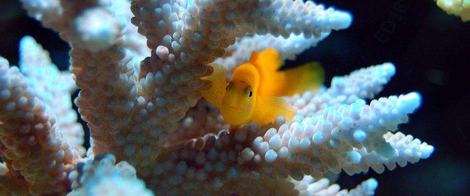 Čištění akvária