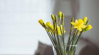 Jarní květiny na parapet