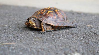 Péče o želvu