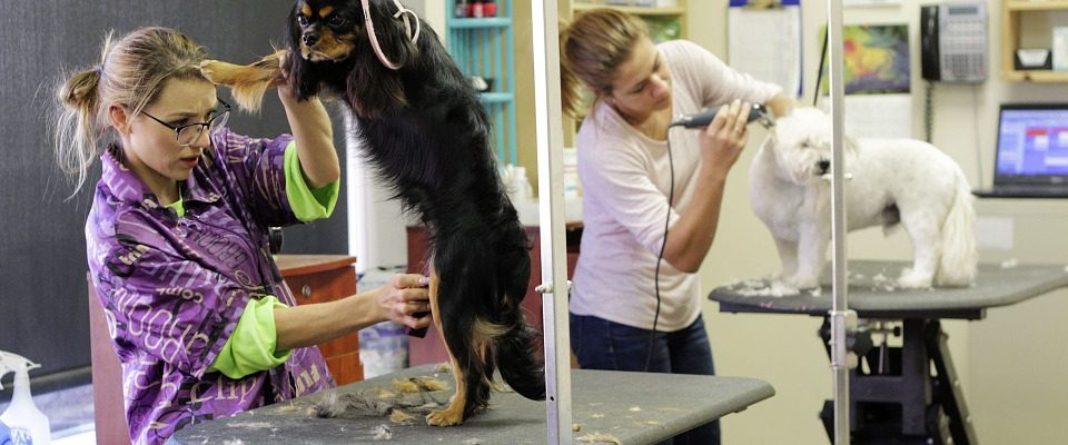 Stříhání psů