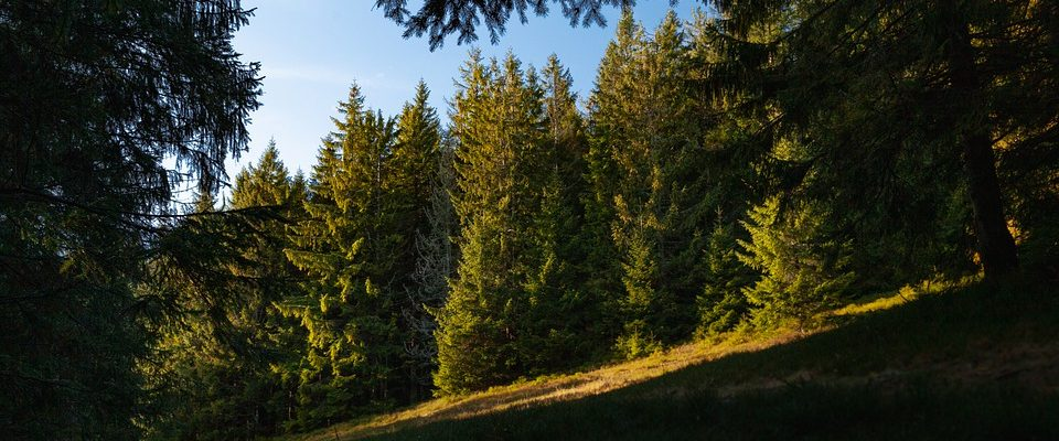 Beskydy nebo Krkonoše? Atraktivní česká pohoří vítají každým rokem tucty návštěvníků